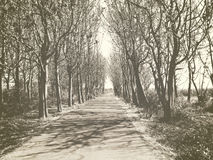 Road surrounded by trees. Vintage photo of a road between trees which leads to an unknown mysterious future stock images