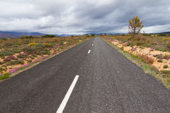 Road surrounded by vegetation in Spring Stock Images