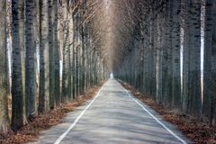 Road and tall trees stock photography