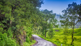 Road at tea gardens Royalty Free Stock Photos