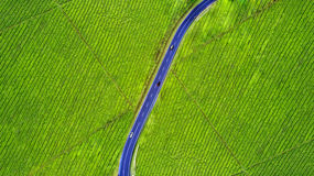 Road at tea plantation. Aerial view of highway and vehicle on the tea plantation at Subang highlands, West Java - Indonesia Stock Image