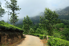Road in Tea plantation Royalty Free Stock Image