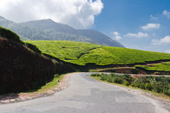 Road in tea plantations. In Munnar, Kerala stock image