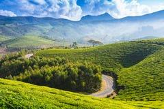 Road on a tea plantations Stock Photos
