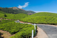 Road on a tea plantations. The road through plantations in India. Province Kerala Royalty Free Stock Photography