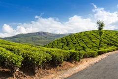 Road on a tea plantations Stock Photos
