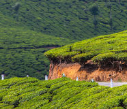 Road on a tea plantations Royalty Free Stock Photography