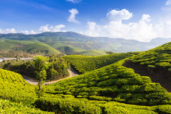 Road on a tea plantations Royalty Free Stock Images