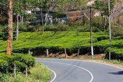 Road on a tea plantations Stock Photo