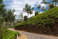 Road on a tea plantations Royalty Free Stock Photo