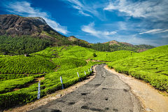 Road in tea plantations, India. Scenic road in green tea plantations, Munnar, Kerala state, India stock photography