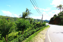Road and tea plantations Royalty Free Stock Images