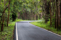 Road in Thailand forest. Wet road in Thailand forest Royalty Free Stock Photography