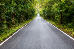 Road in Thailand forest. Wet road in Thailand forest Royalty Free Stock Photo