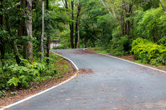 Road in Thailand forest. Wet road in Thailand forest Stock Image