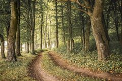 Road is through thick dense forest. Summer day in forest_ stock images