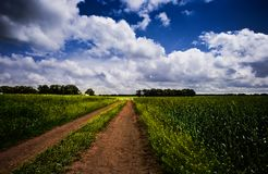 Road though the meadow Royalty Free Stock Images