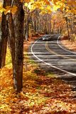 Road Through Maple Trees Stock Photos