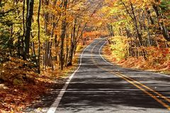 Road Through Maple Trees Royalty Free Stock Image