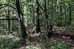 Free Road Through The Forest To The Lopiennik Peak Stock Photo - 178303460