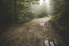 Road Through The Misty Woods Stock Images