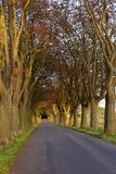 The road to... Autumn road on a sunny day Royalty Free Stock Photography