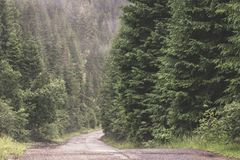 Road through Calimani Mountains. Road to the abandoned Calimani quarry after a heavy rain Royalty Free Stock Photo