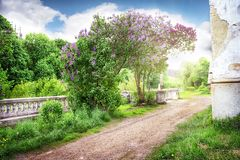 Road to the abandoned farm blooming lilac Royalty Free Stock Image