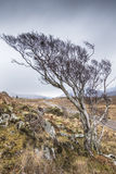 Road to Achiltibuie in the highlands. Royalty Free Stock Photography