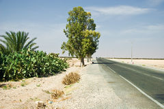 Road to Agadir Royalty Free Stock Photos