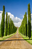 Road to agritourism in Tuscany between cypresses Stock Photography