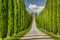 Road to agritourism in Tuscany between cypresses Royalty Free Stock Photos