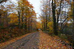 Road to autumn. Forest in fall and road cover with yellow leaves royalty free stock photos
