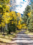 Road To Autumn Aspens Stock Image