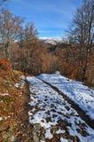 Road to autumn beechen wood Royalty Free Stock Photo