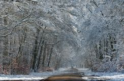 Fontainebleau forest under snow. Road to Barbizon in the  Fontainebleau forest Stock Images