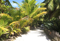 Road to the beach Anse Lazio Royalty Free Stock Images