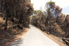 Road to biokovo mountain Royalty Free Stock Photos