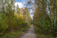 Road to birch grove royalty free stock images