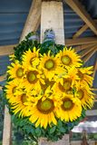 Bright yellow sunflowers for Cuba`s patron saint, El Cobre, Cuba royalty free stock photography