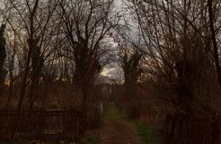 The road to the cemetery at dusk. Autumn stock photography