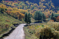 Road to colorful autumn Stock Photography