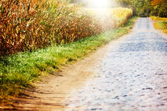 Road to the corn field Royalty Free Stock Photo