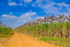 The road to corn filed Stock Photography