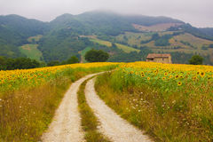 Road to the country cottage. In the rural land Royalty Free Stock Photos