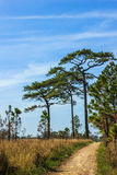 Road to destination. Gravel path to the pine jungle at park with blue sky Stock Photos