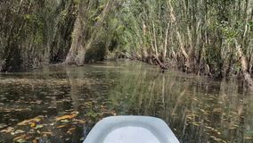 Discover the Melaleuca forest by boat. stock video footage