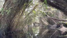 Discover the Melaleuca forest by boat. stock video