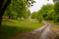 The road to the edge of the forest. Winding, dirt road. Disappearing into the depths of oak forests Stock Photos