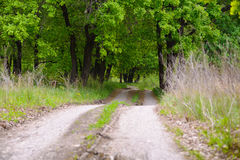 The road to the edge of the forest. Winding, dirt road. Disappearing into the depths of oak forests Royalty Free Stock Photos